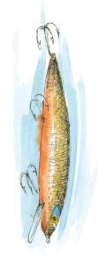 Lake Stories Salmon Lure Illustration