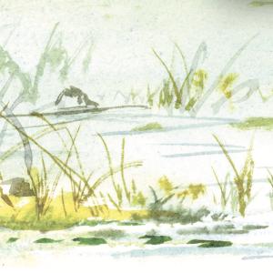 pond illustration