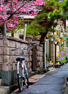 Bike in Alley Omi
