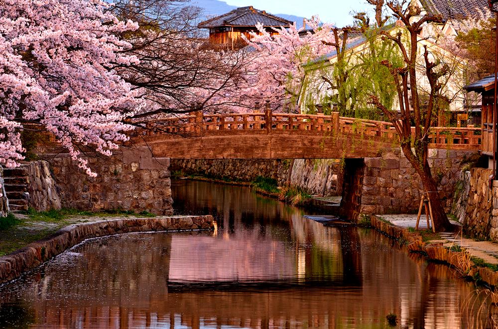 Bridge at Magic Light Omi