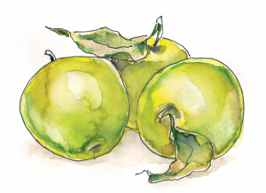 Green Apples Illustration