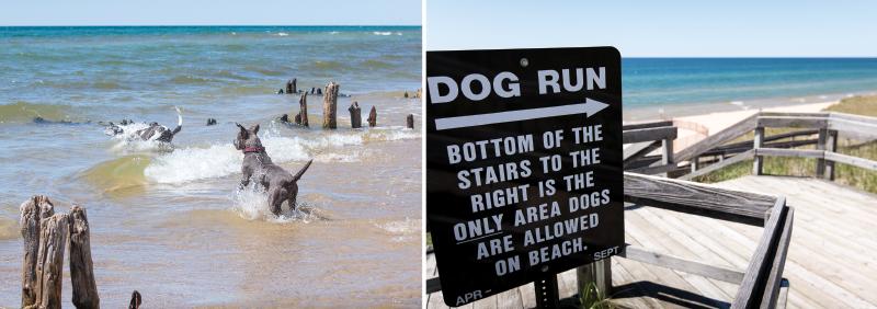 Beach dog, dog run sign