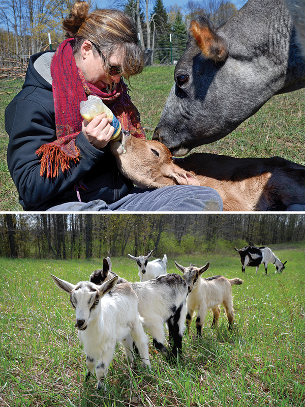 Madeleine Vedal - Goats