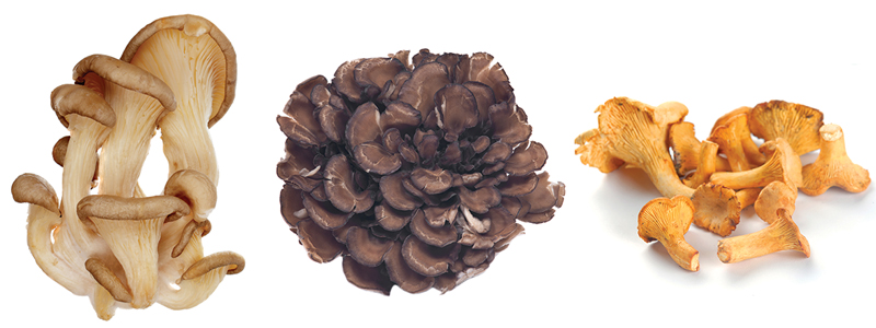 Left to right: Oyster, Hen of the Woods, Chanterelle mushrooms