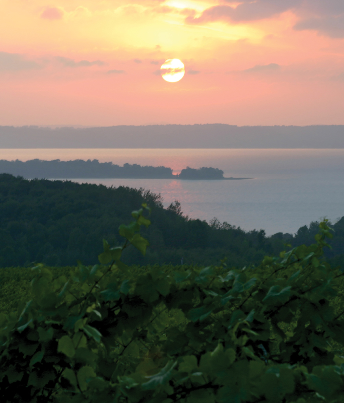 sunset on vineyard