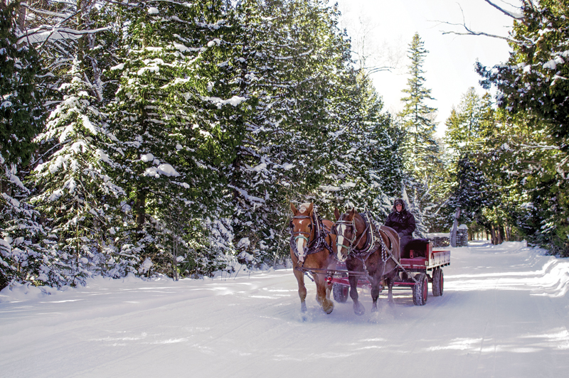 Horse and carriage rides - Mackinac Island