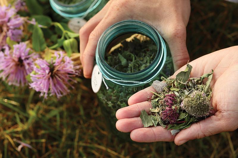 Tea made with Bee Balm
