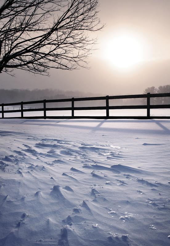 Frosty Fence Row