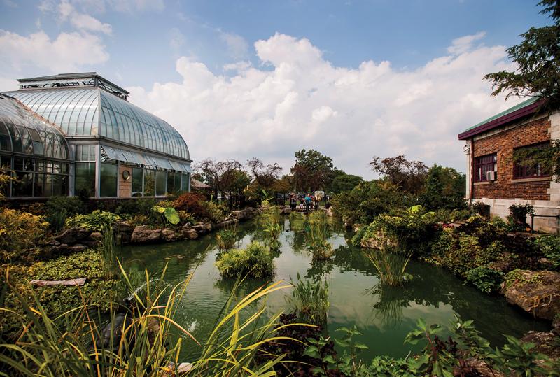 Koi pond at Belle Isle