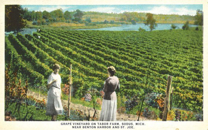 Grape Vineyard Tabor Farm