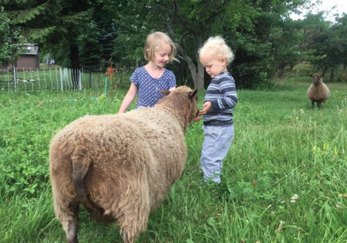 Kids with sheep