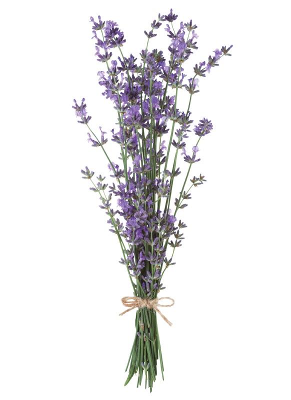 Michigan-Lavender-Festival