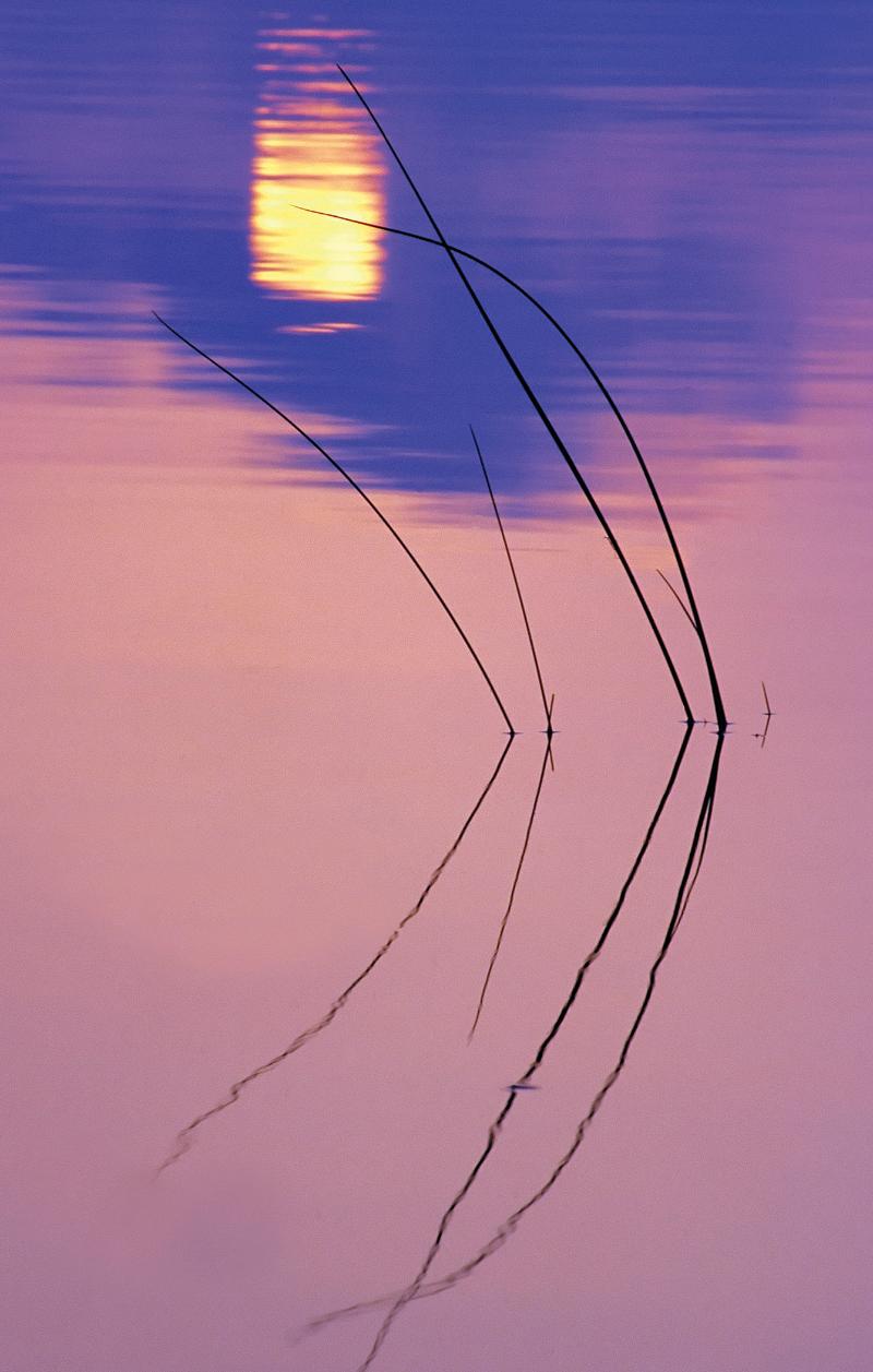 Lake rushes at sunset