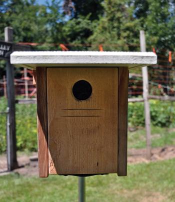 X-Box Style Nest Box