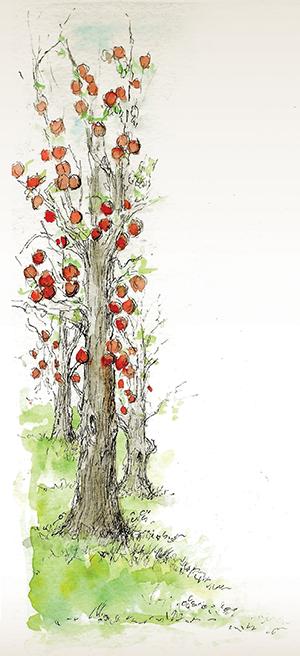 St. Lazare tree