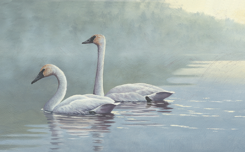 """""""Trumpeters in the Mist"""""""