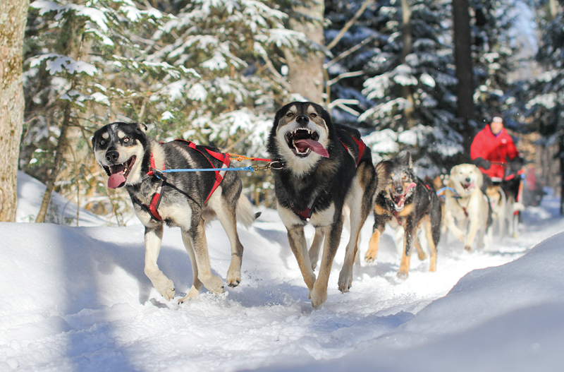 Nature's Kennel Sled Dogs