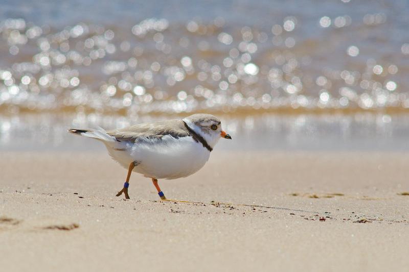 """Beach Bird"""