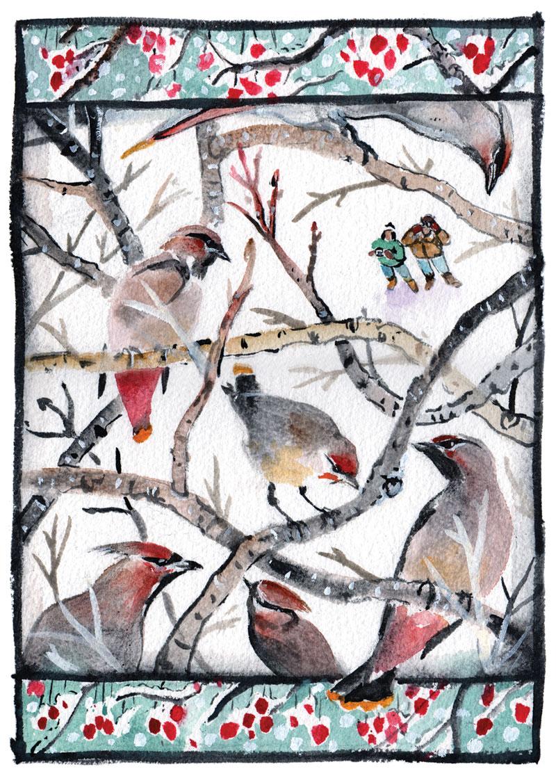 Winter Waxwings by Glenn Wolff
