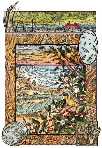 Yellowthroats illustration