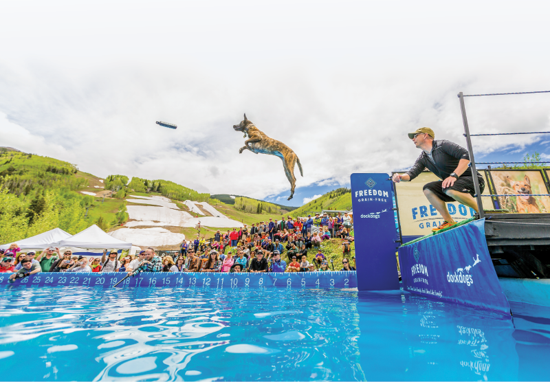 Dog long-jumping