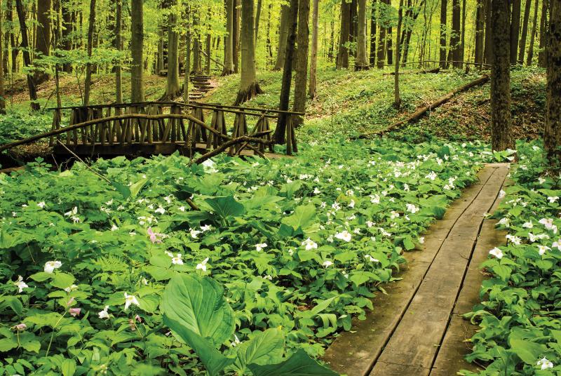 Dowagiac Woods Nature Sanctuary
