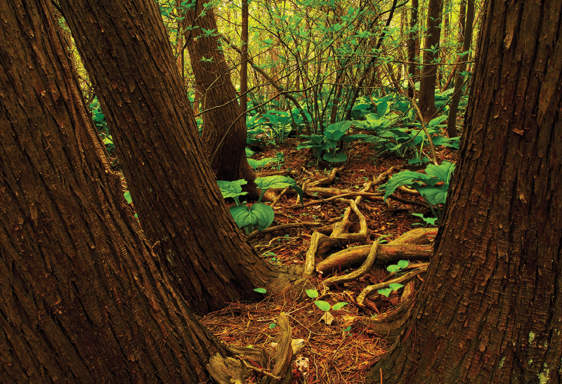 Lakeville Swamp Nature Preserve
