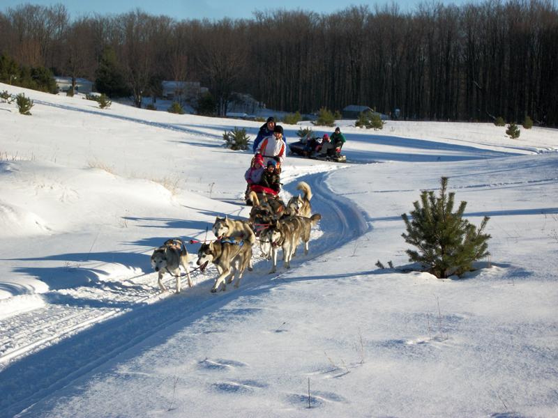 dogsled mid-race
