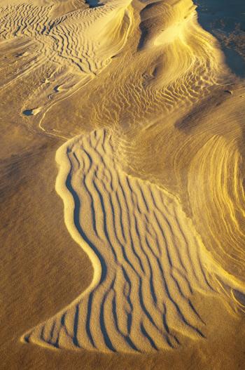 """""""Dune Detail, Silver Lake State Park"""""""