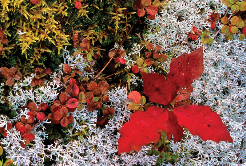 """""""Ground Cover Along Grand Sable Dunes, Autumn"""""""