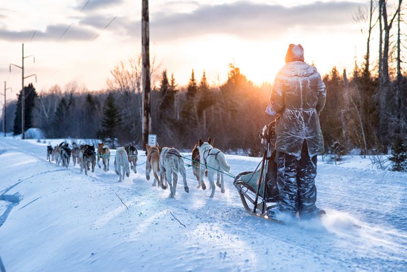 Dogsled Race at Sunrise