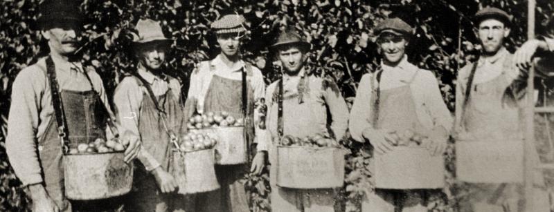 Old-school apple pickers