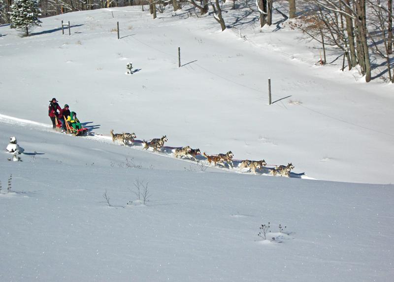 Downhill 12 dog Roger Starke