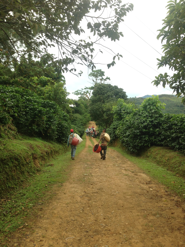 End of the day at coffee farm
