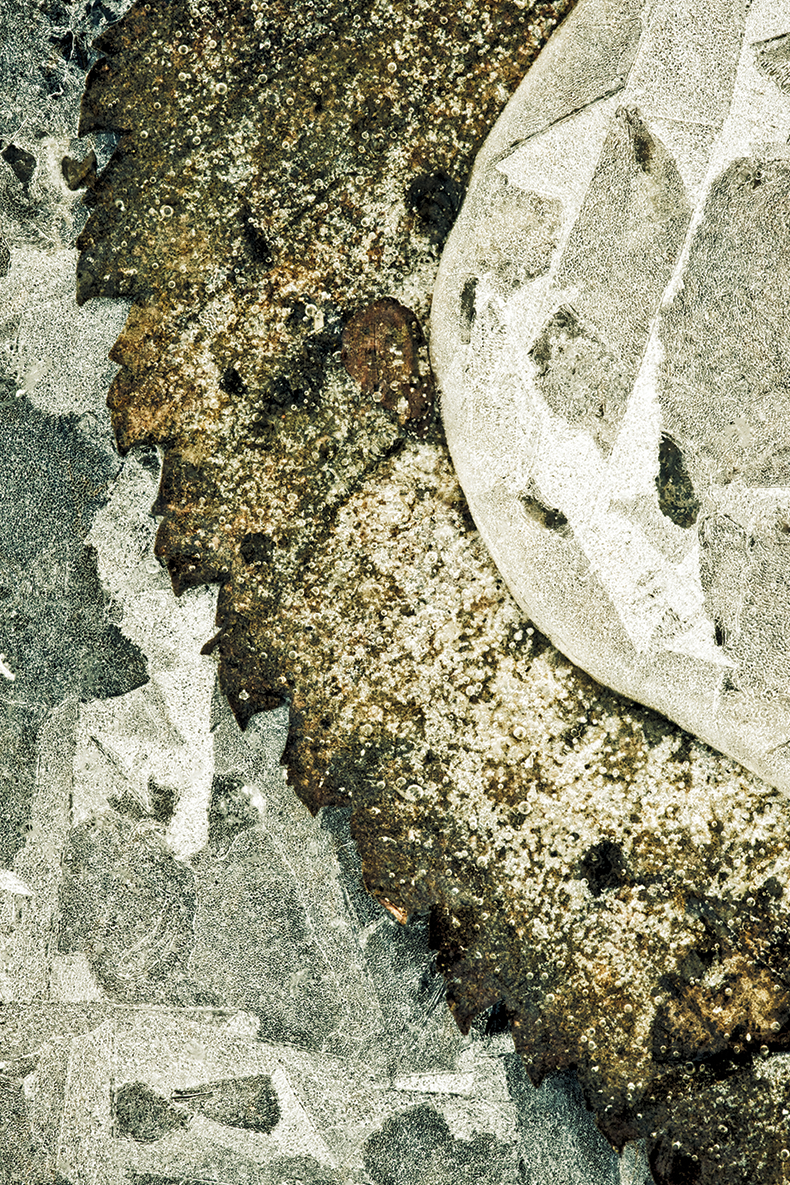 """Leaf Teeth in Ice"""