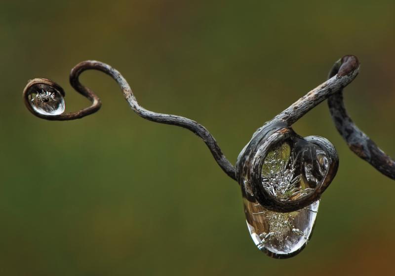 """""""Frozen Raindrop in Vine III"""""""