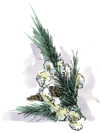 Pine flower