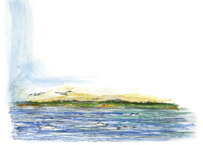 Lake Stories Salmon Illustration.