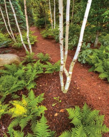 Ground tree bark & pine needle trail