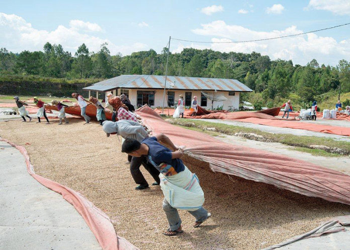 Schuil Coffee Drying on Flats