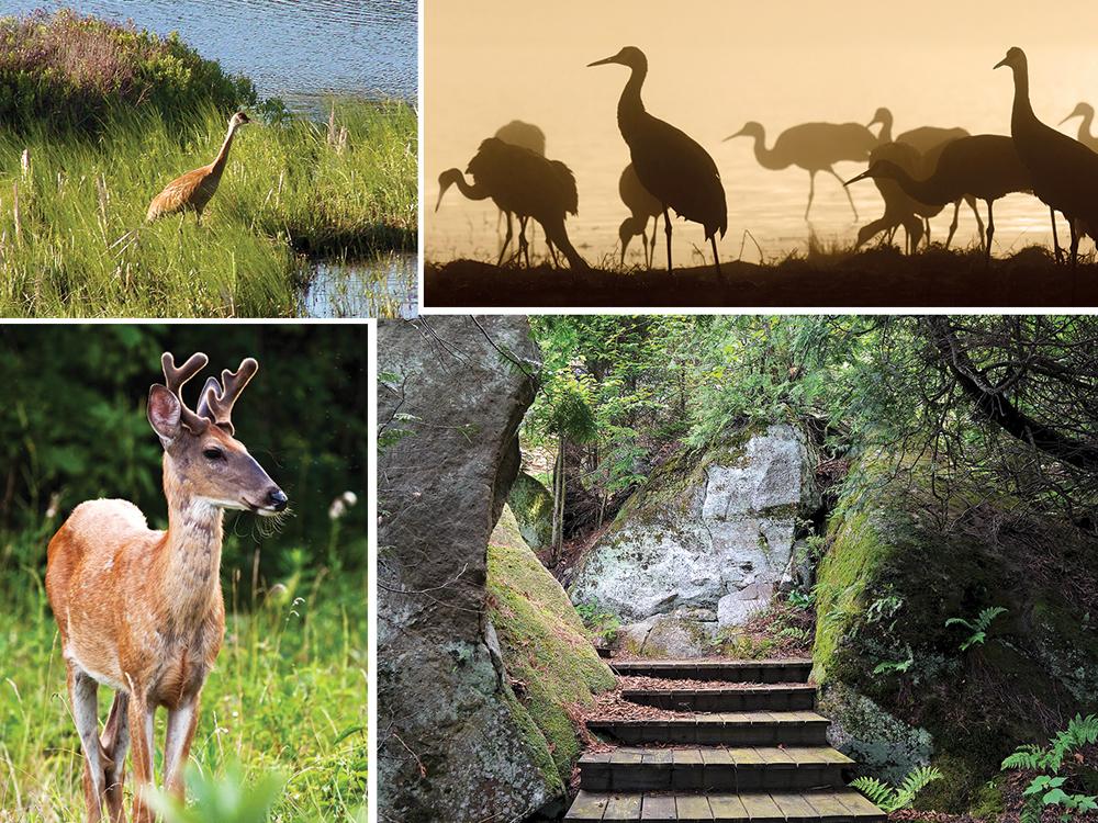 Upper Peninsula animals
