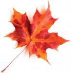 iStock Maple Leaf