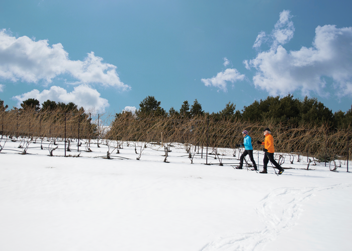 Black Star Farms patrons snowshoeing through the vineyard