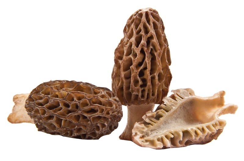 National-Morel-Mushroom-Festival