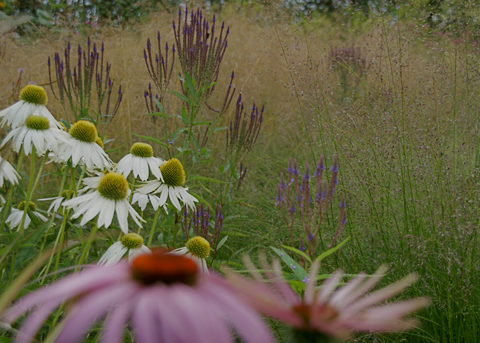Flowers Along with Wetland and Rain Gardens