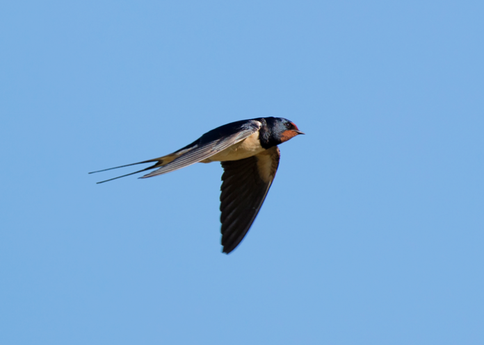 Photograph of bird courtesy iStock.